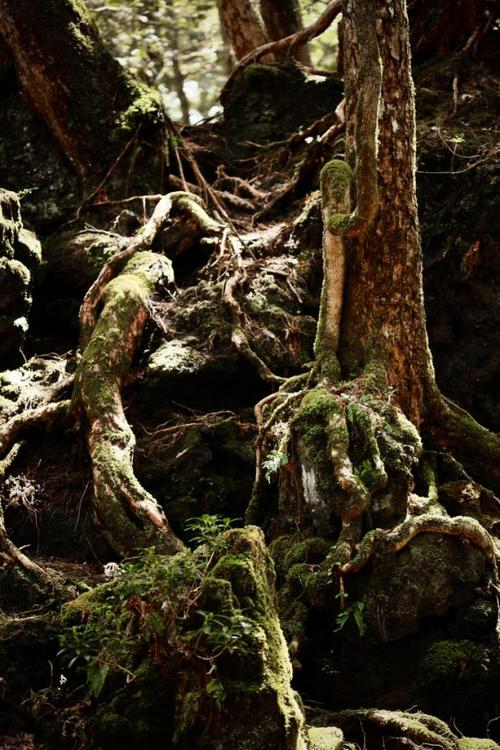 aokigahara_suicide_forest