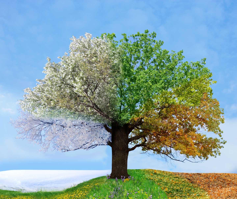 fus_brand_seasons_tree2