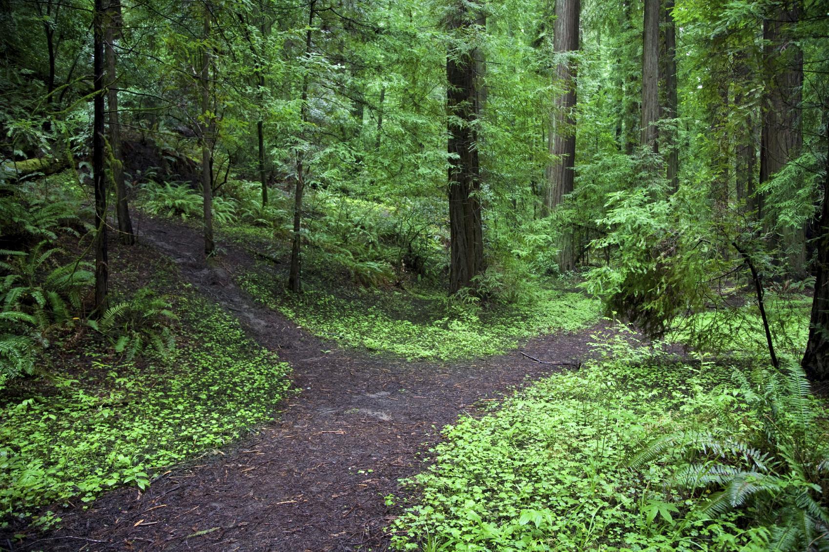 path-fork