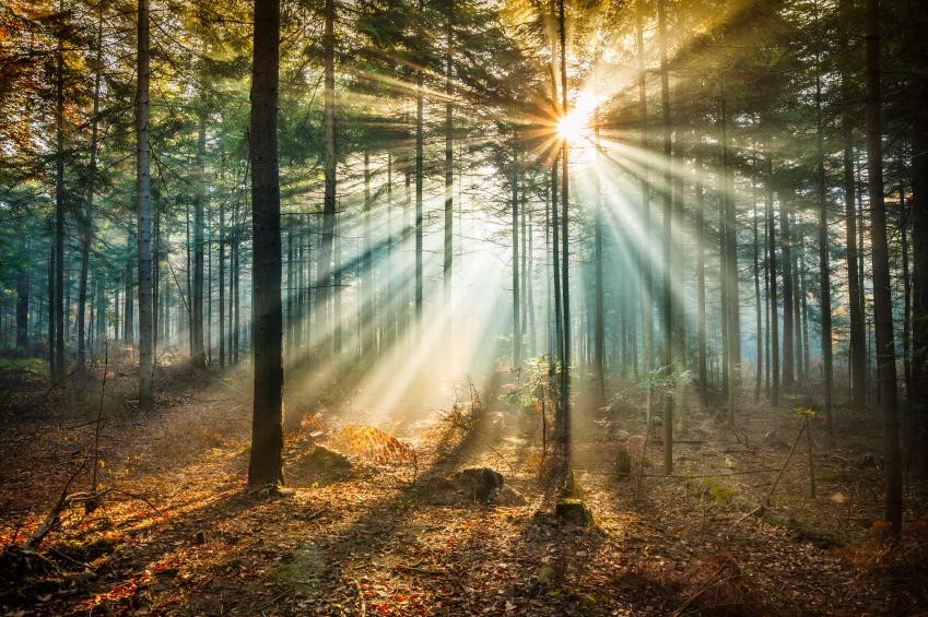 path-light